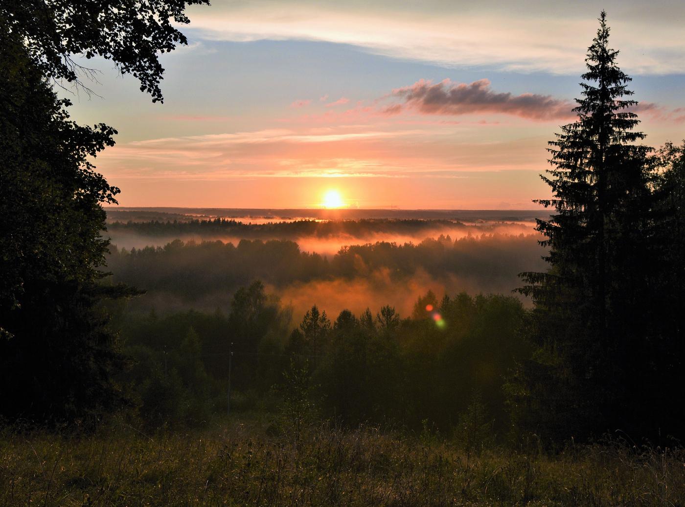 картинки с вечерним лесом своих работах бенуа