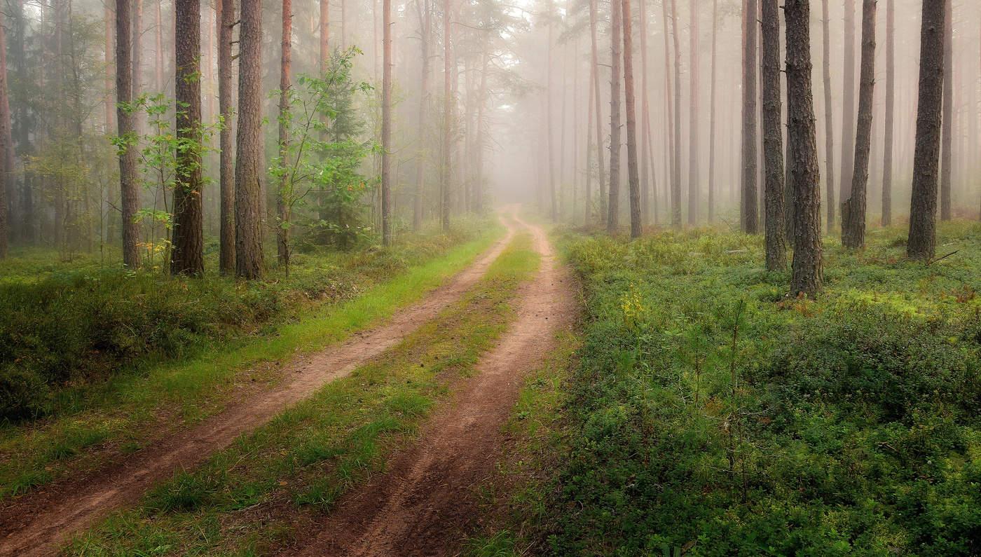 Картинки лес утром