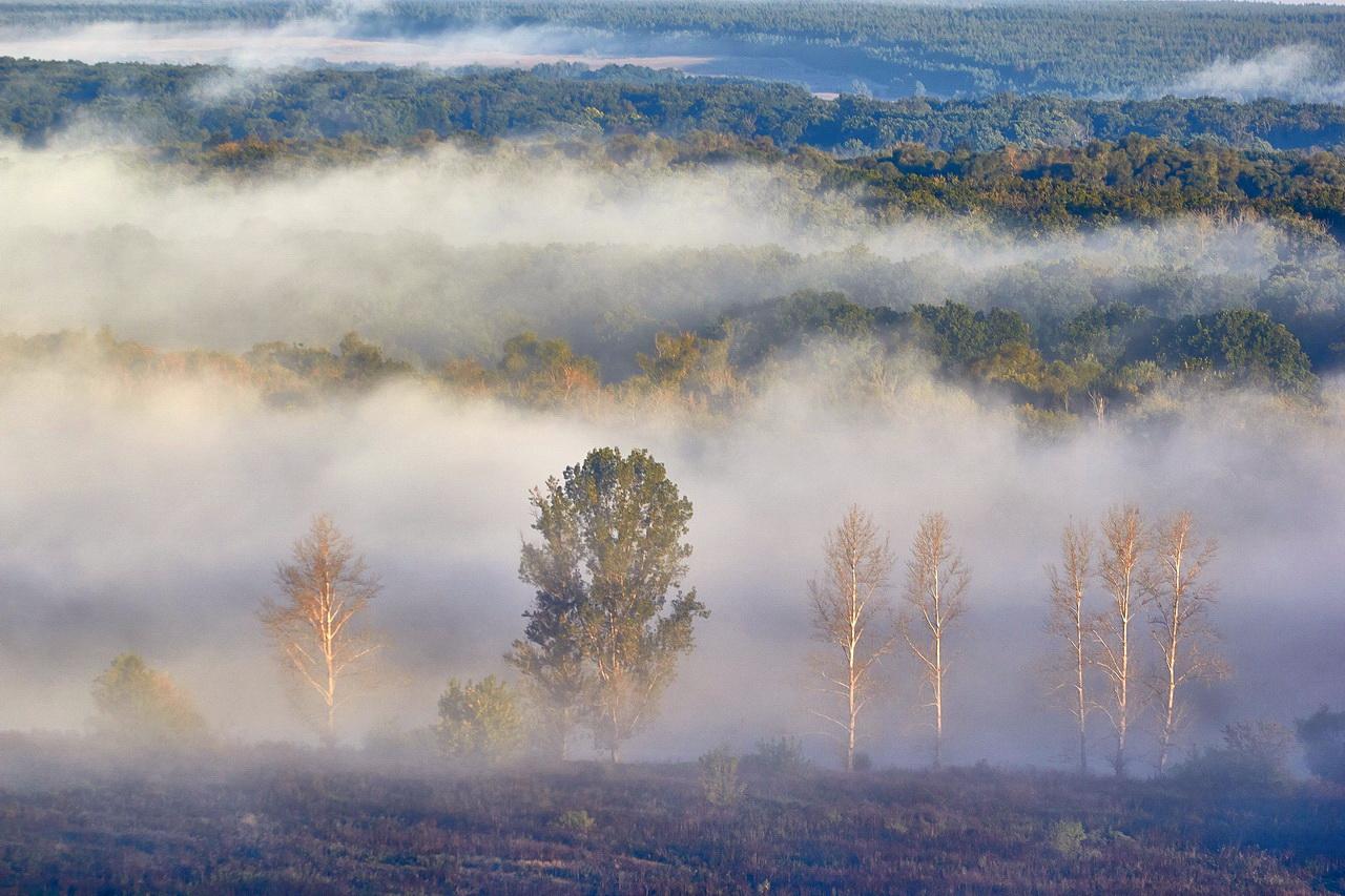 речь картинки сильного тумана голубого можно использовать