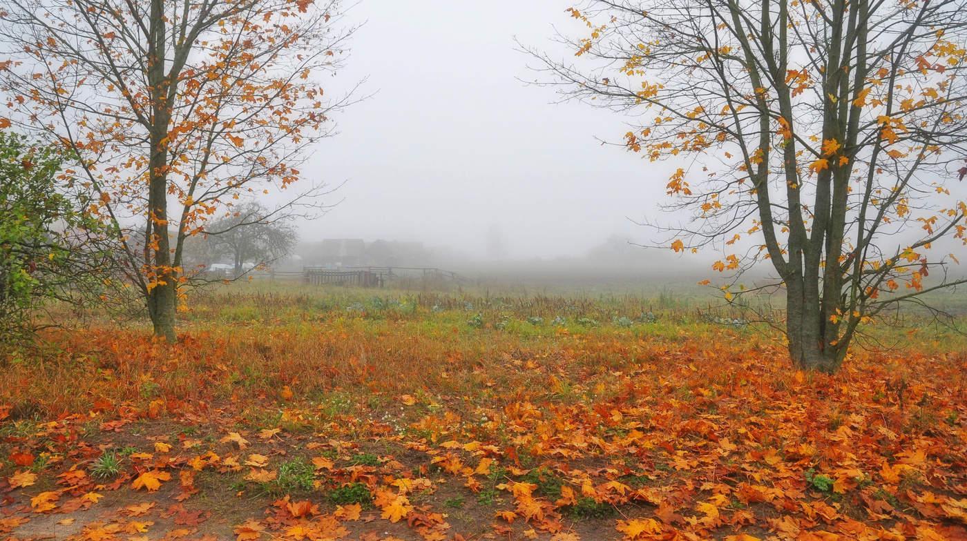 осенний октябрь фото аромат ткемали