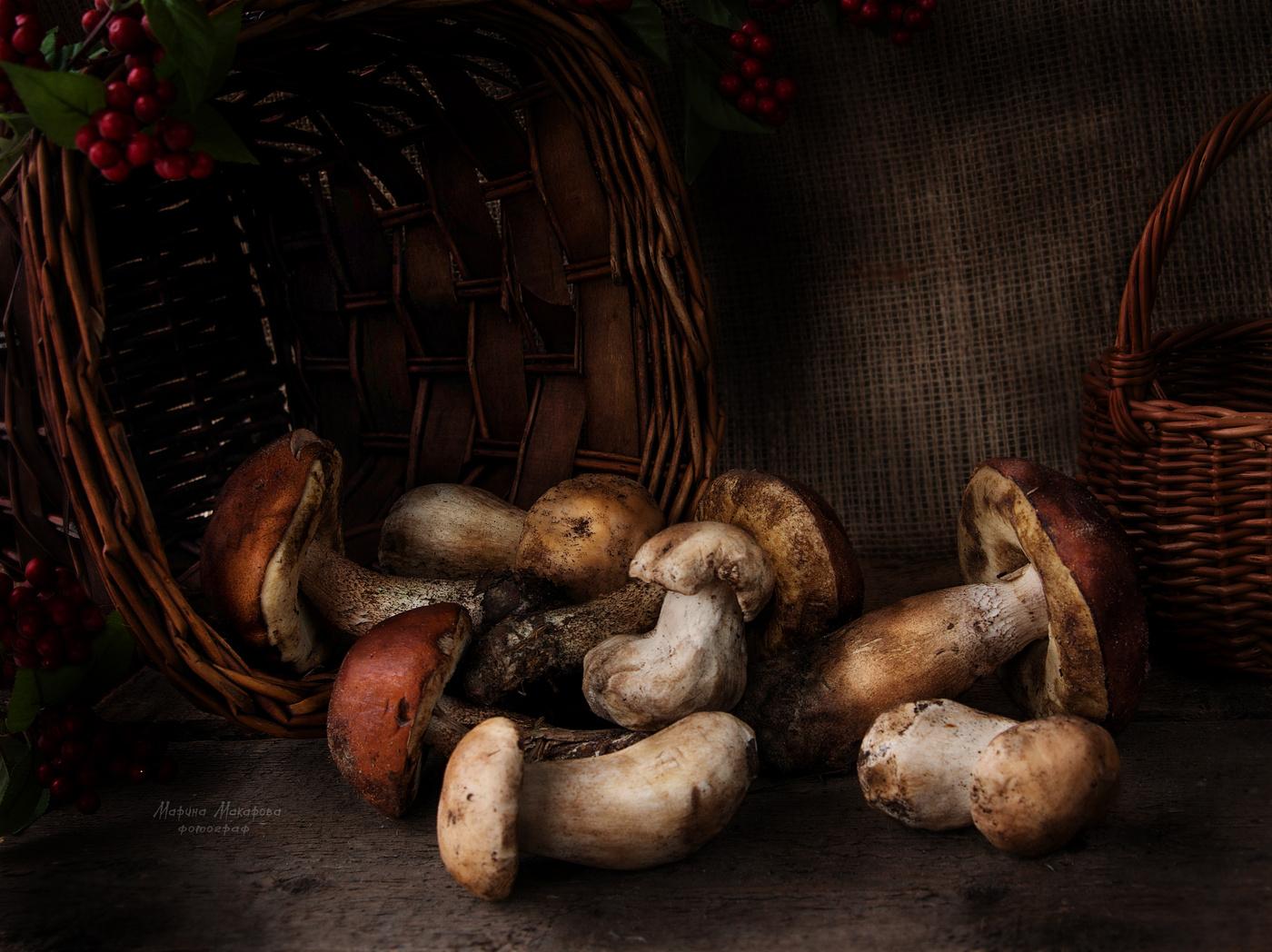 натюрморт с грибами фото рисунки