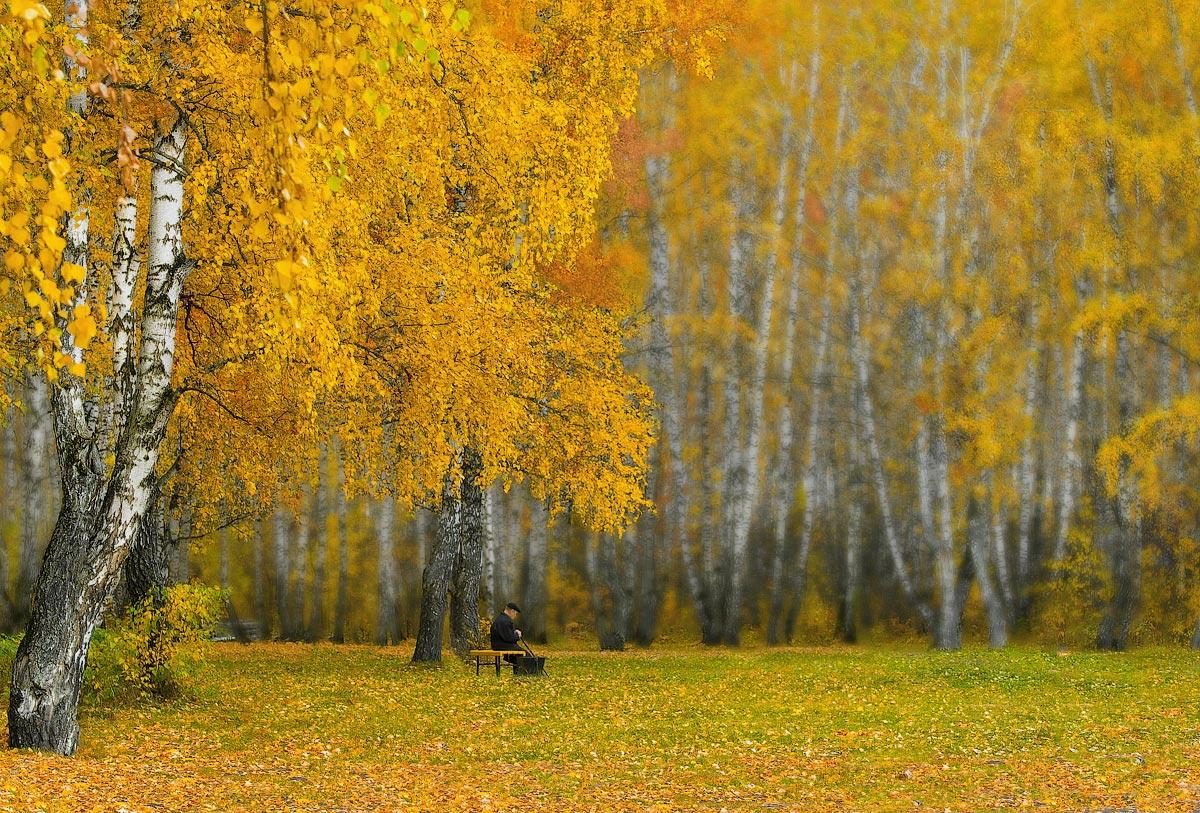 Осенняя береза в картинках