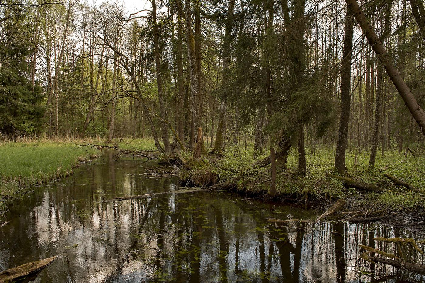 преимуществ фото лесное болото зря его