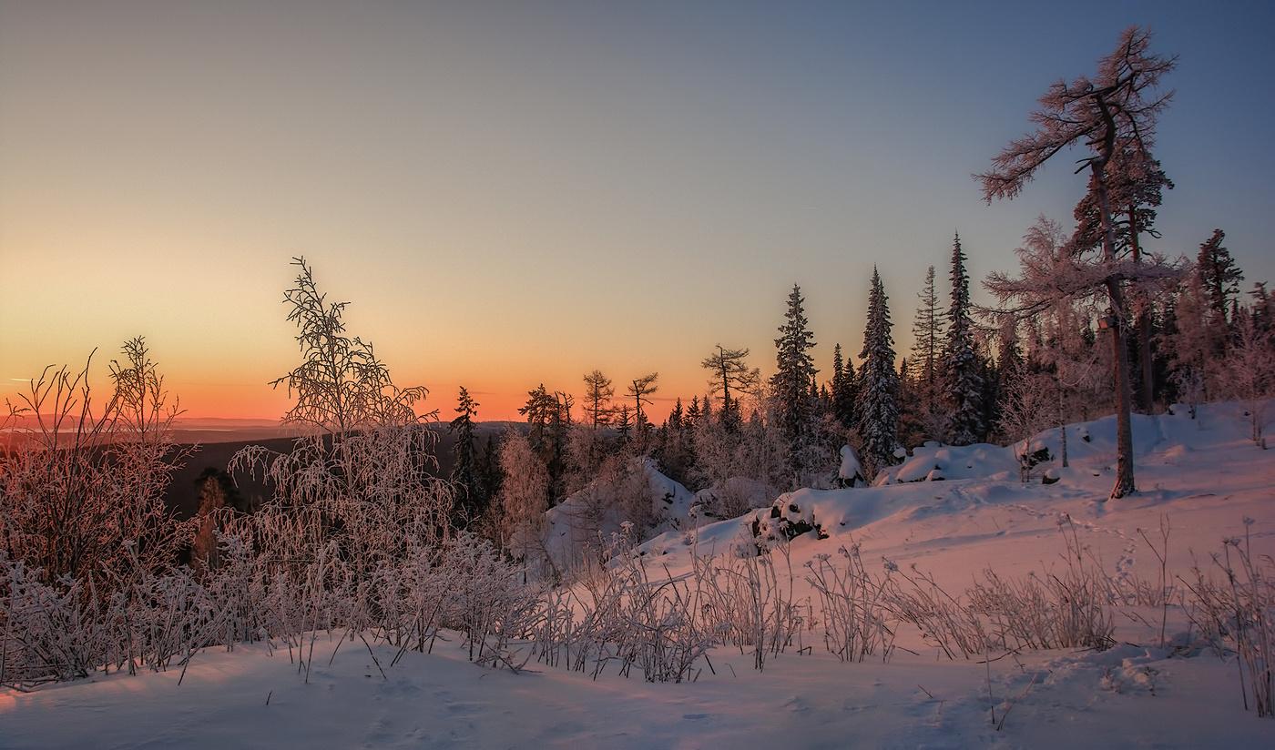 решила отказаться раннее зимнее утро фото сорта садовой голубики