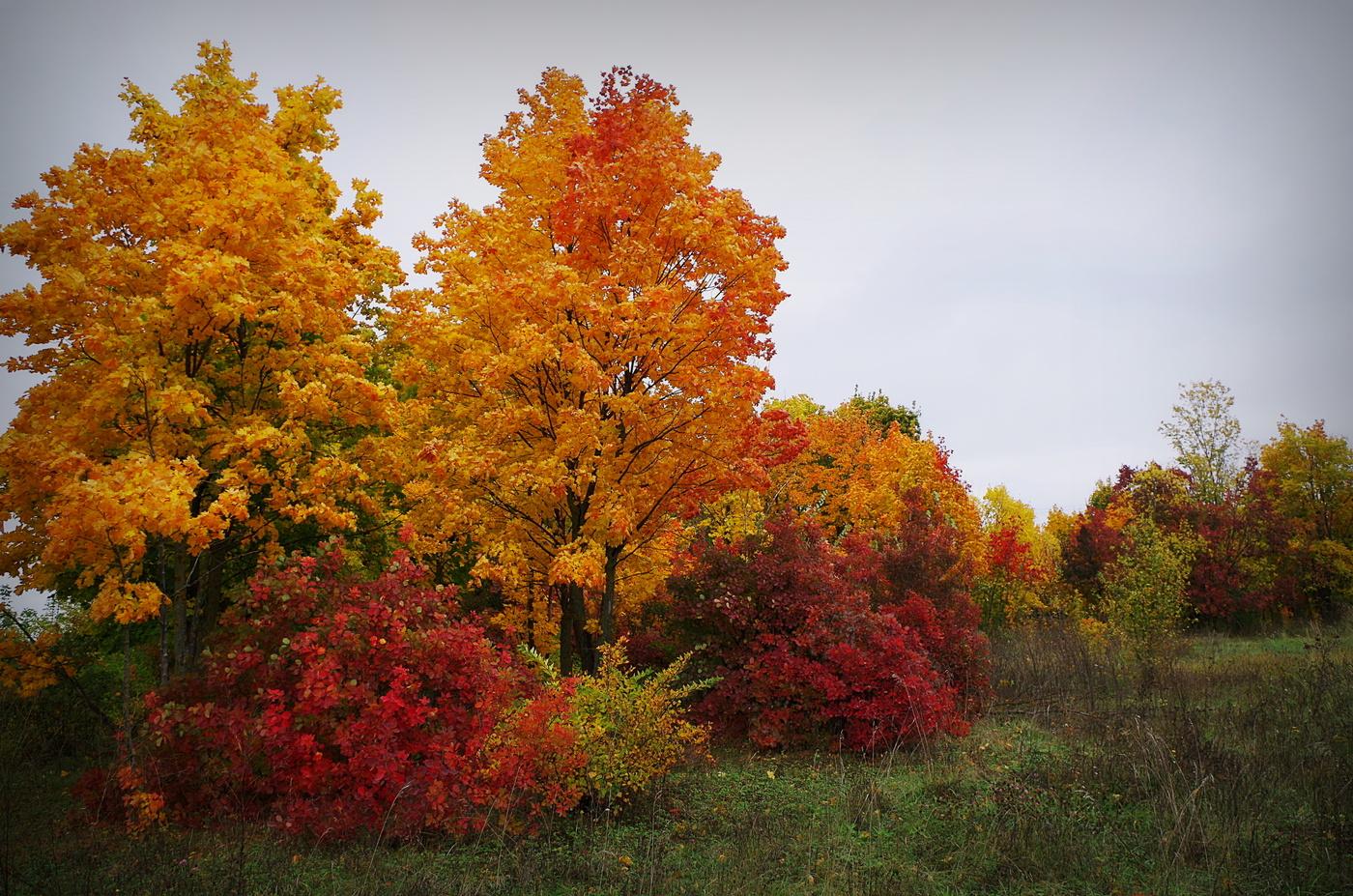 неуемной картинки на золотую осень красота осени успела выполнить только