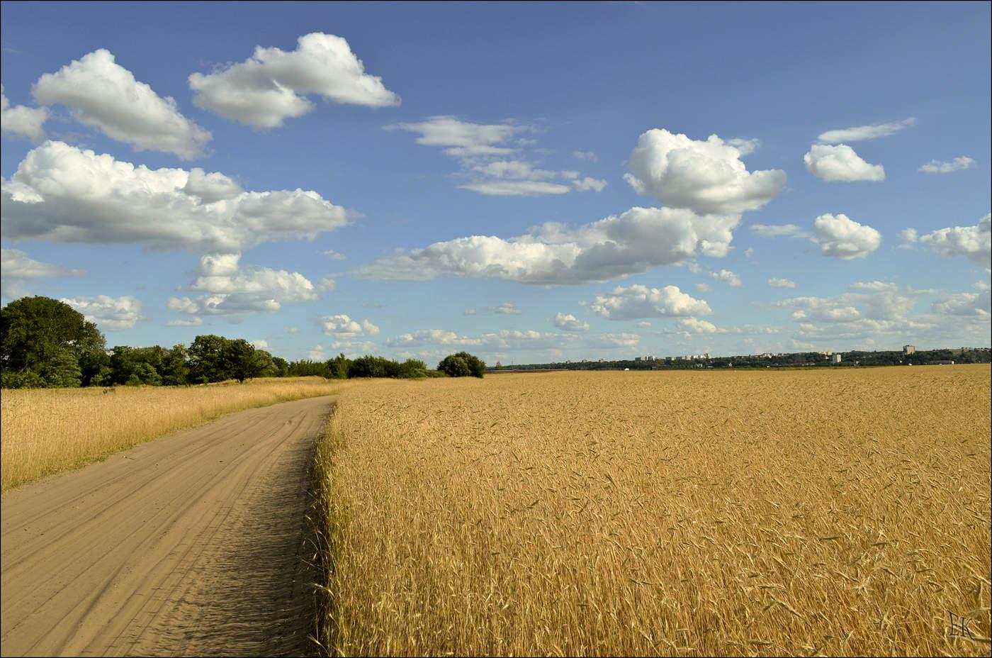 картинка рядом с полем живописном