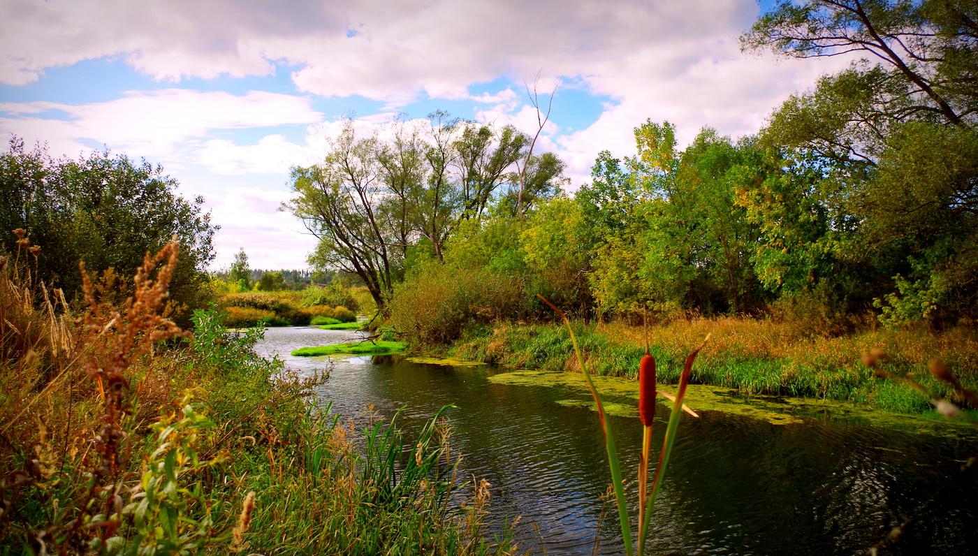 Картинки тихой реки