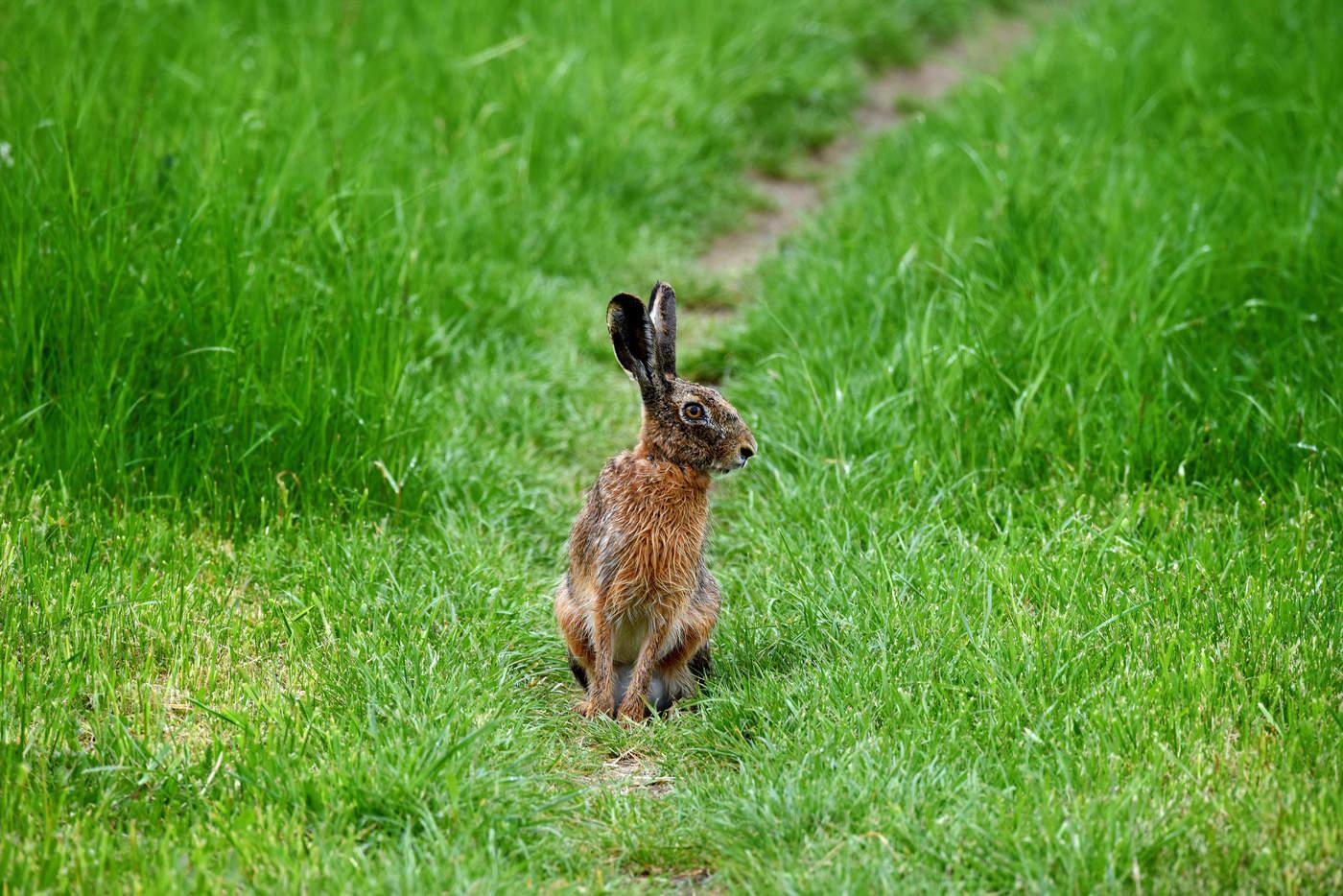 Заяц в поле картинки для детей