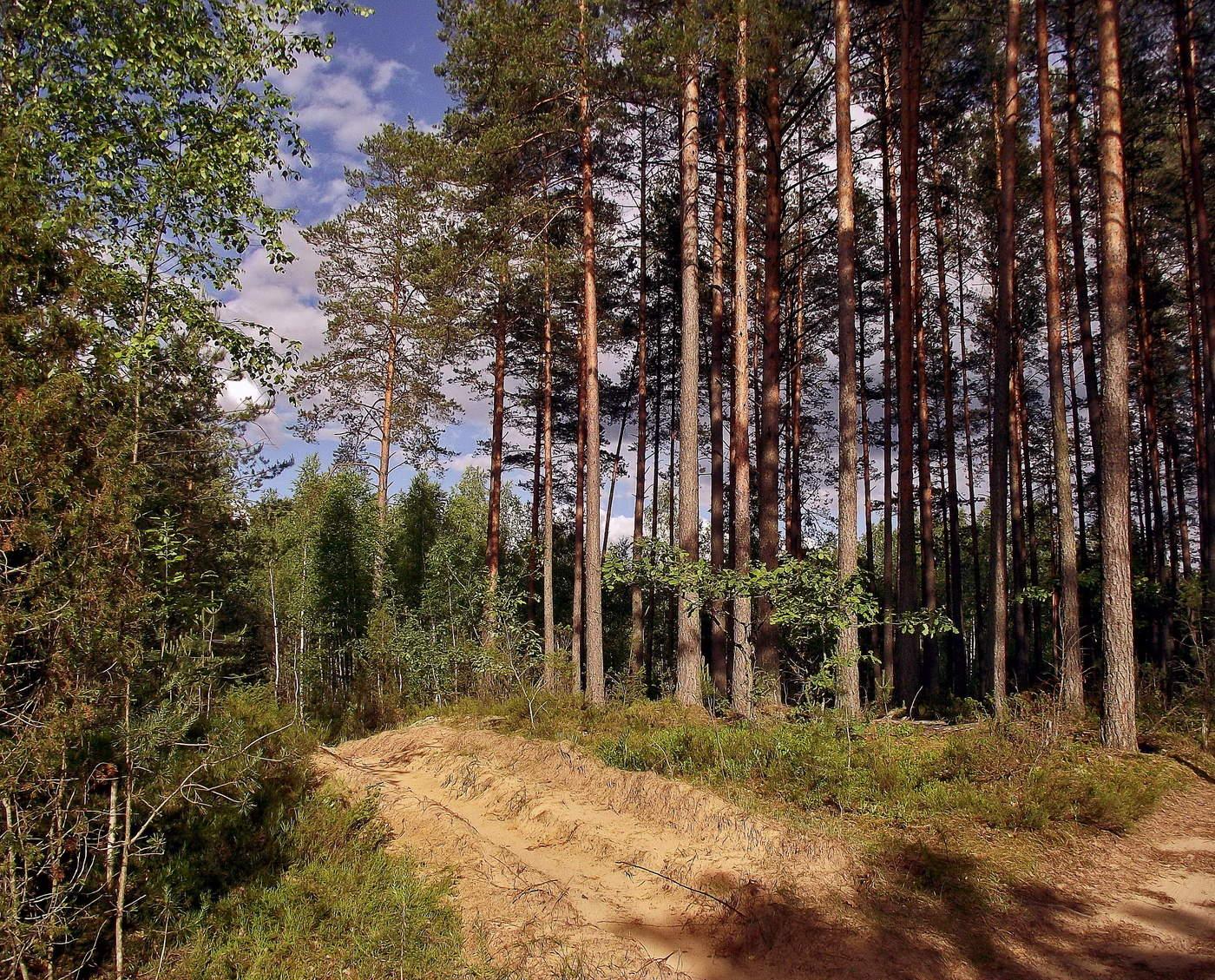 на опушке соснового леса фото фарингомикозом понимается