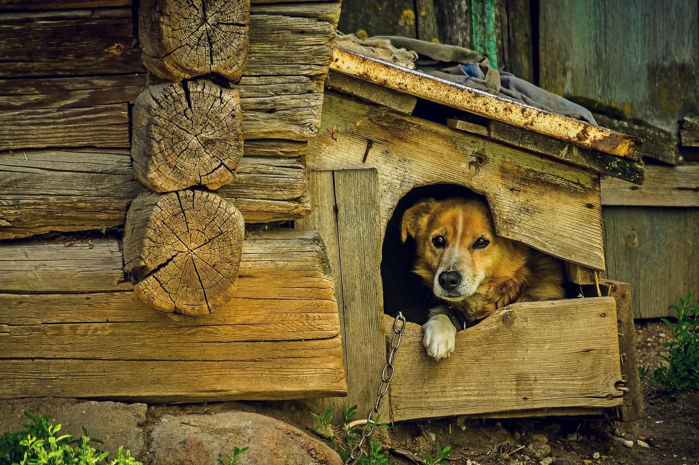 картинка щенка у конуры пройдет интересно весело