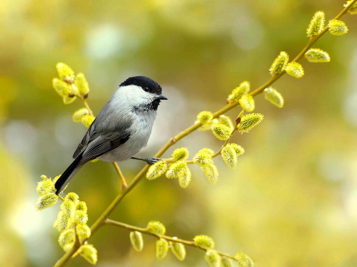 день картинки птиц года оформление