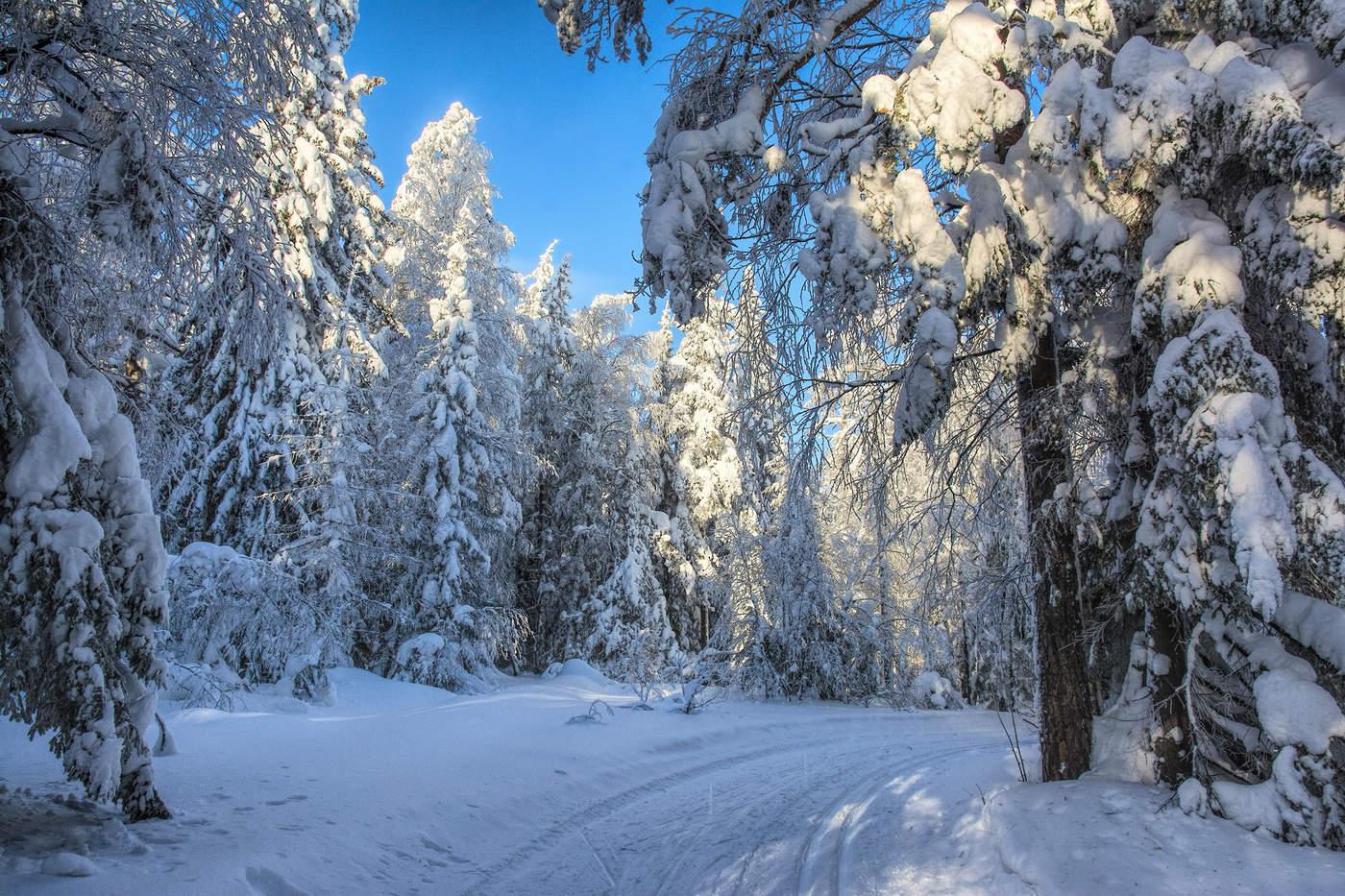 Картинки зимнего леса фото