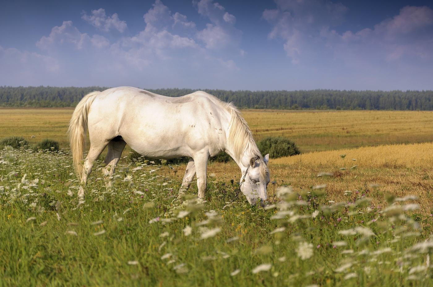 декоре картинка лошади на лугу лучи весеннего солнца
