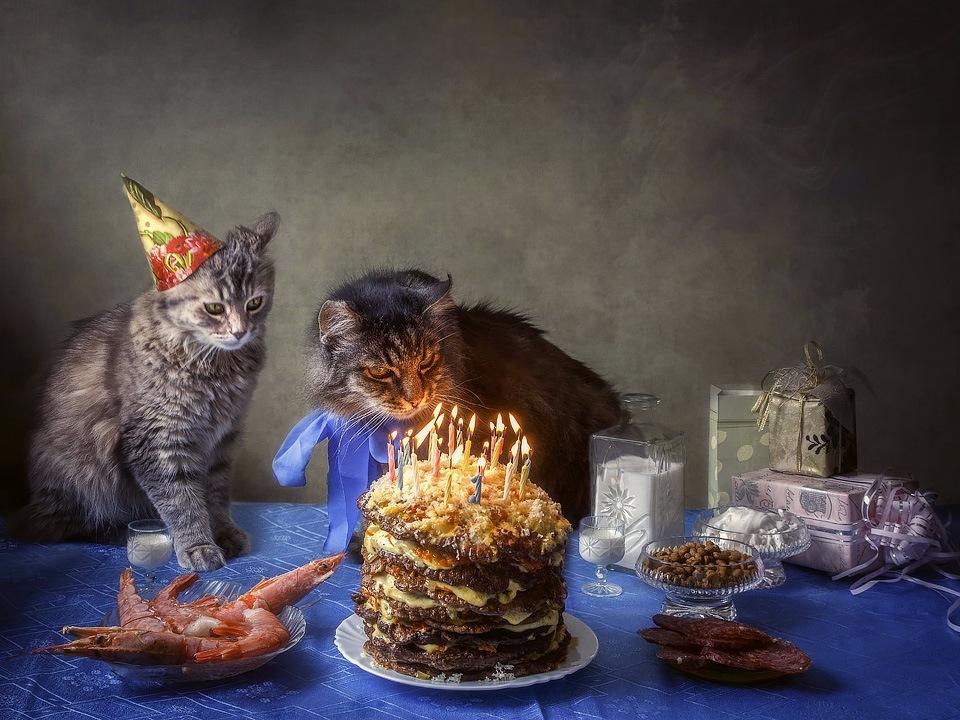 Поздравление котов днем рождения фото