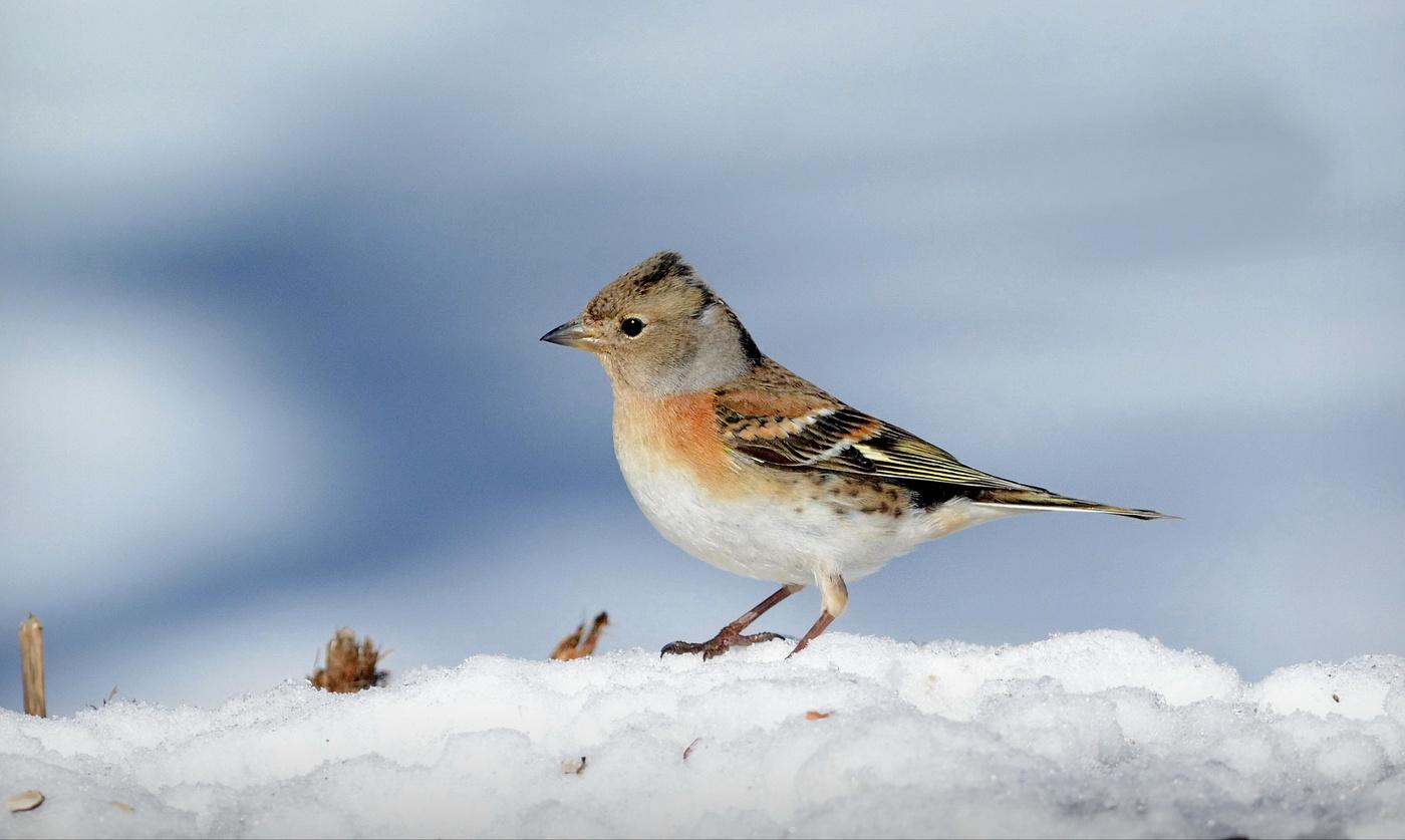 картинки юрка птицы быстро