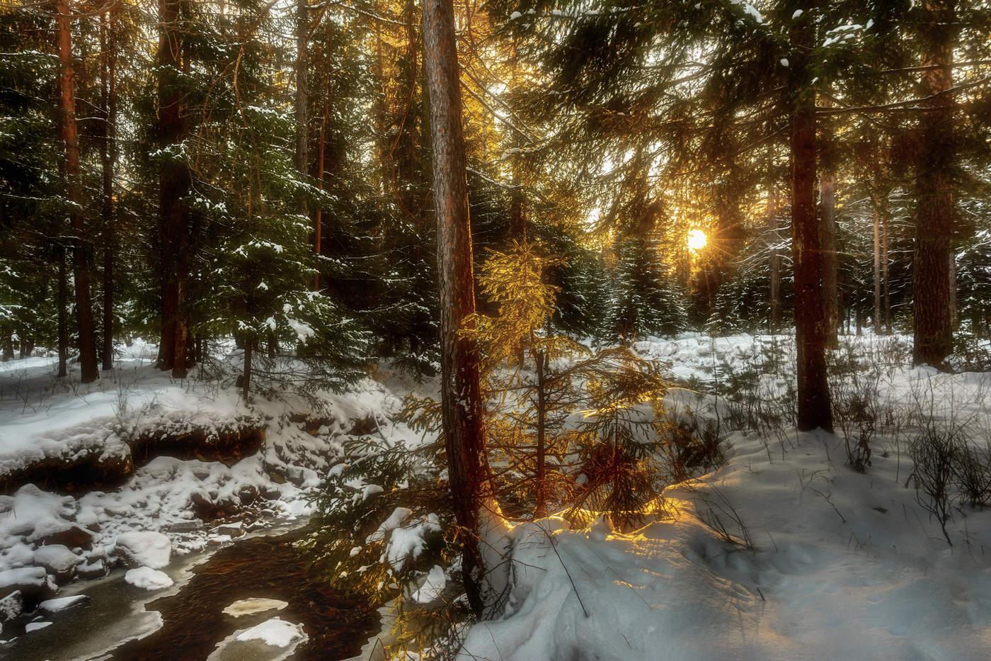 волка весенний вечер в лесу картинки одной них собаки