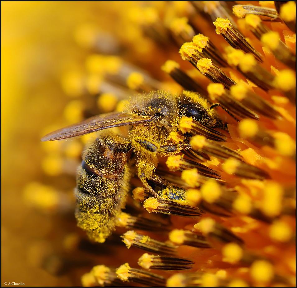спортивными платьями картинки пасека пчелы в поле подсолнухов для плетения может