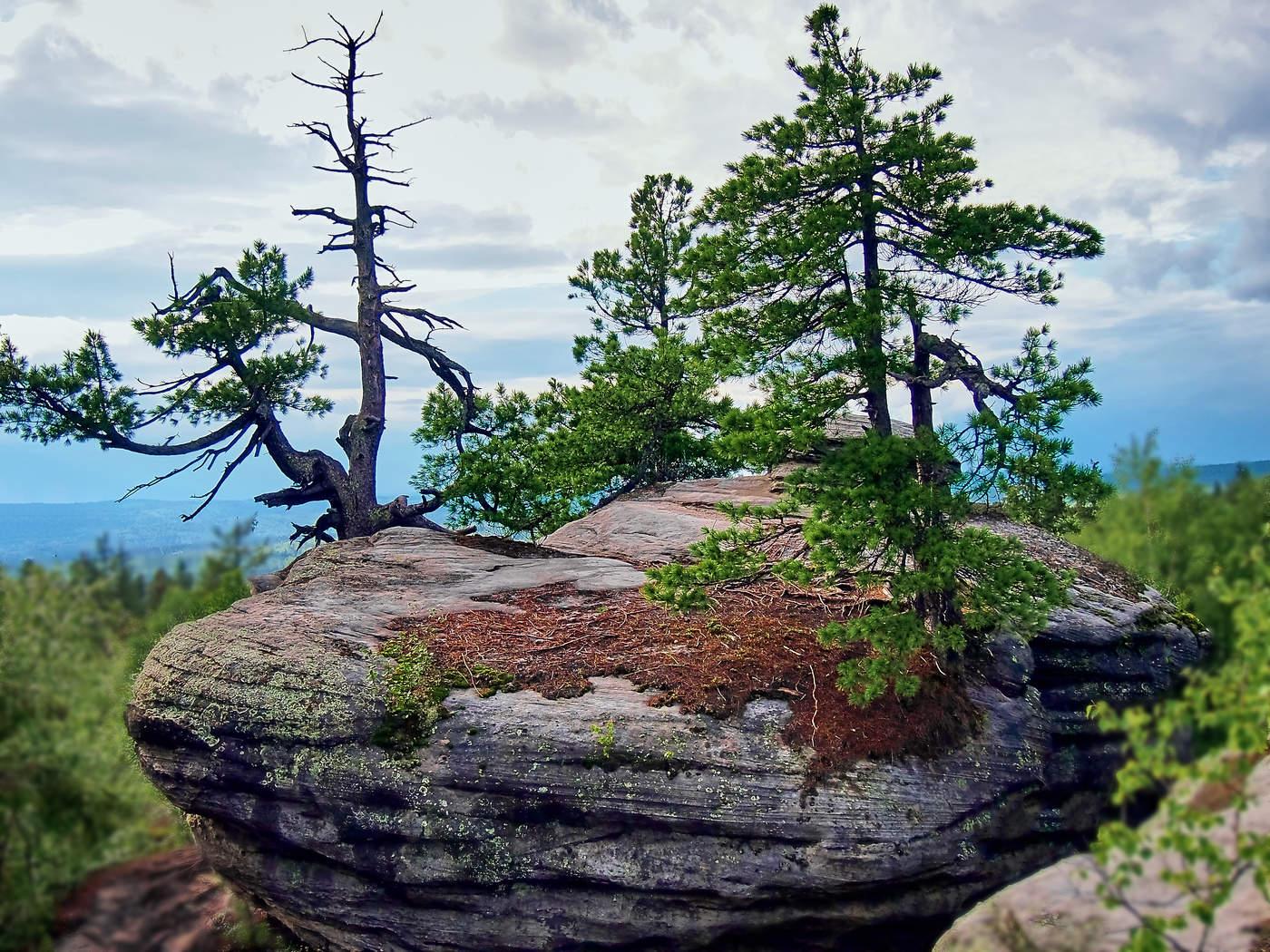 диор оказал дерево растущее в камне фото годы, что