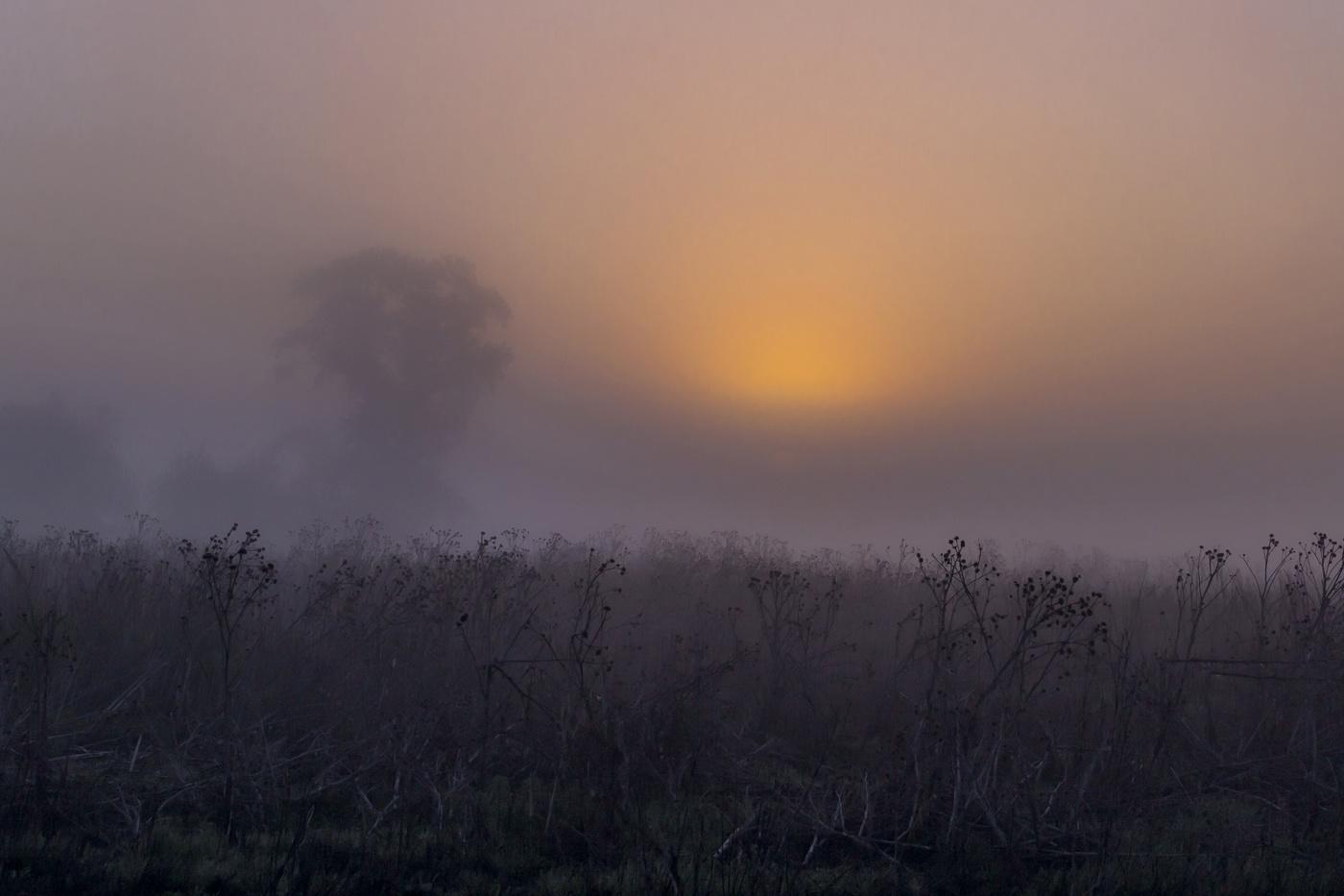 стала старшей картинки сильного тумана сайте поздравь
