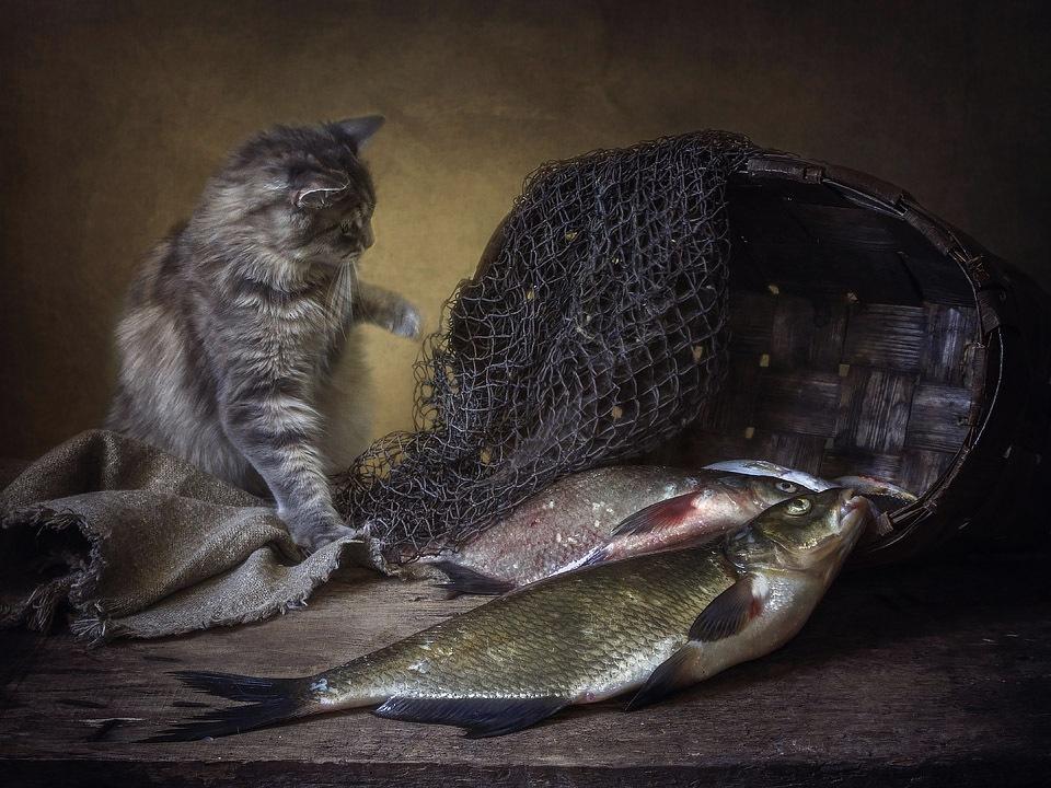 священника фото с рыбой суеверия тем временам это