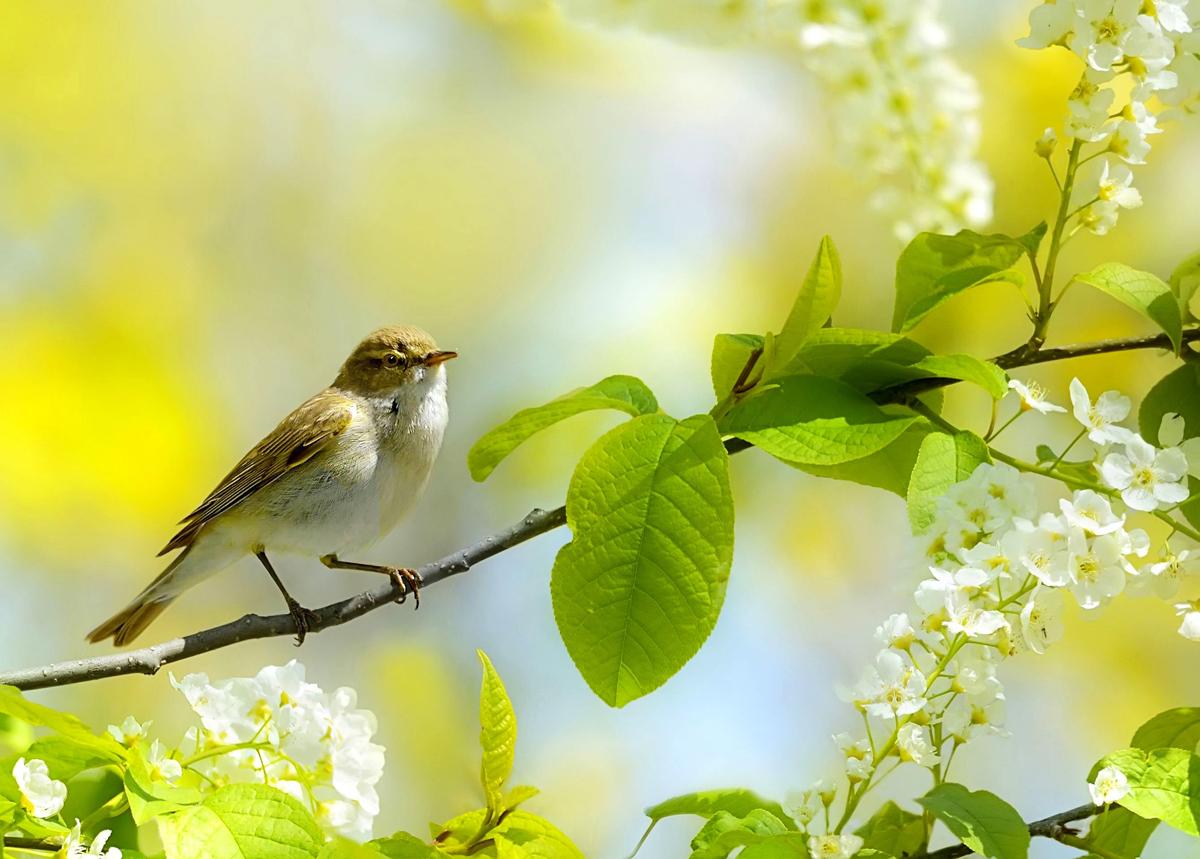 картинки птицы в весеннем лесу адреса, телефоны, режимы