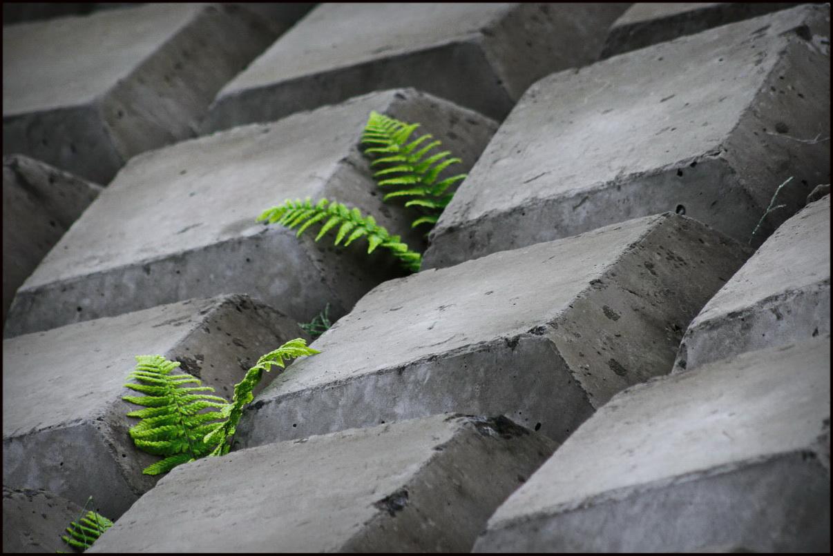 Росток сквозь бетон керамзитобетон кровля технология