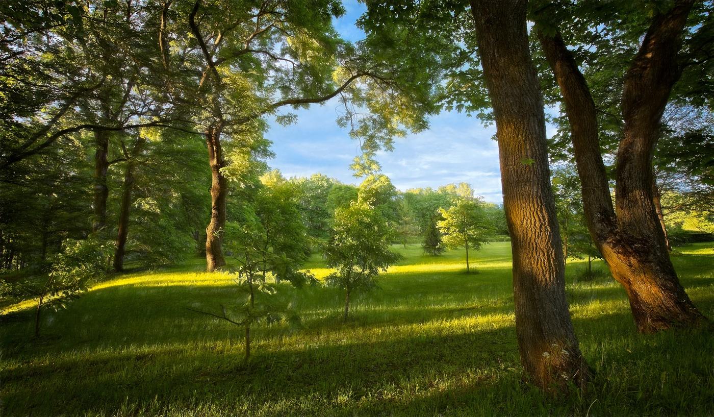 солнечное лето лес картинки долгие годы производства
