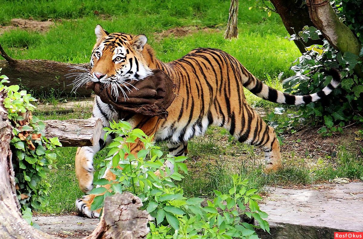 Зоопарк животные картинки