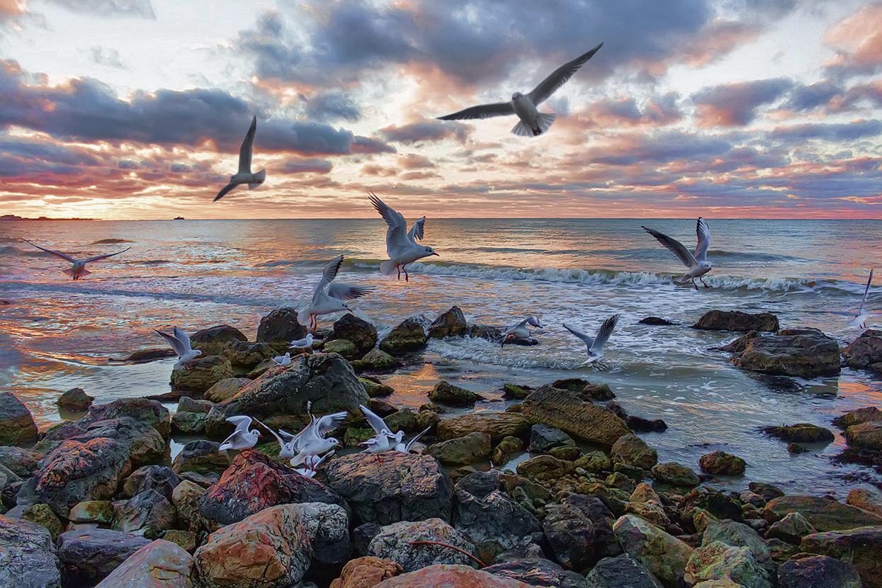 Картинки чаек у моря