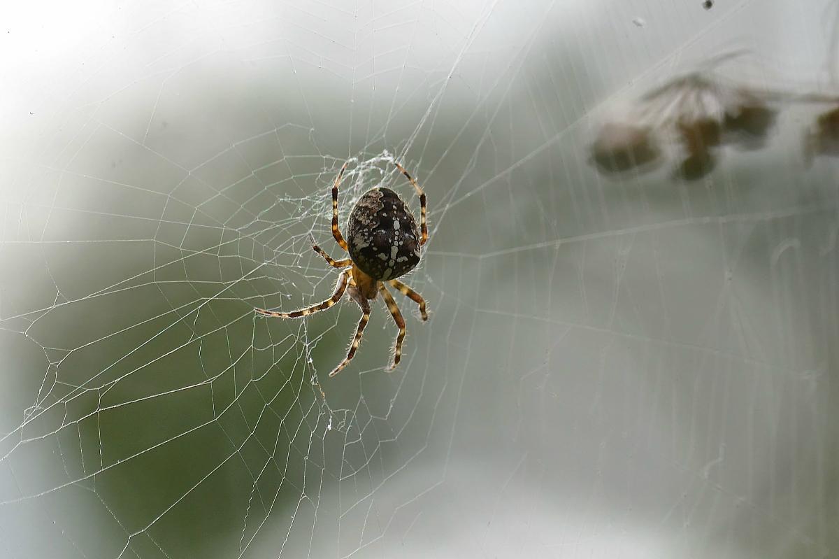 Как фотографировать пауков
