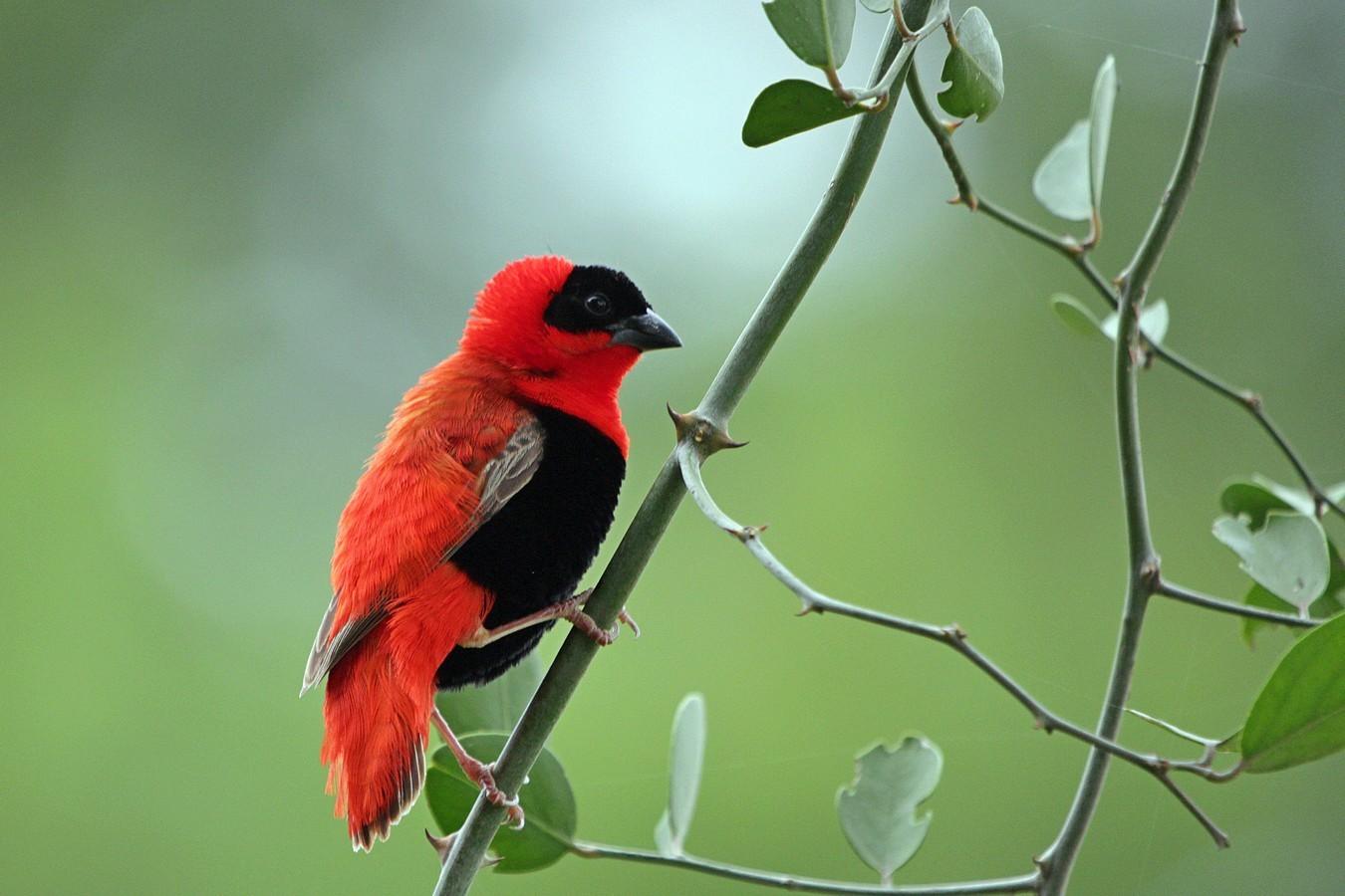 внешность ткачики птицы фото эти конструкции предназначены