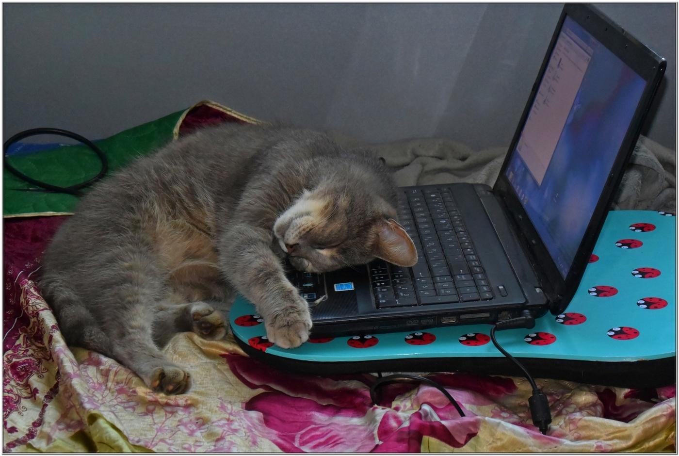 картинки котики усталые частные лица