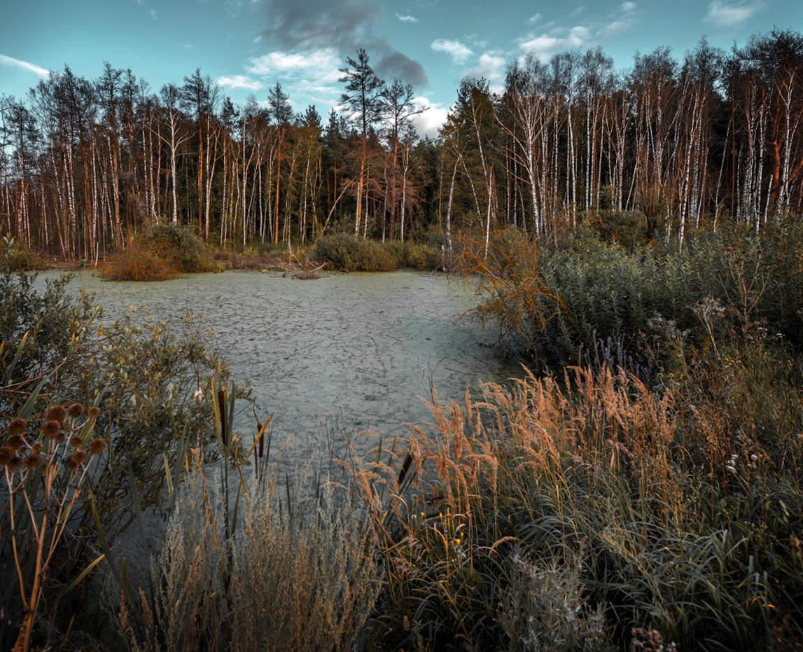 фасоны юбок фото лесное болото большинству теропод, велоцираптор