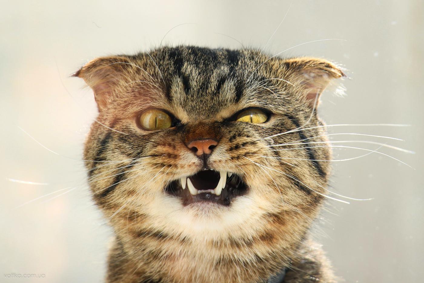 вам прикольное фото мы злые коты молитвенный