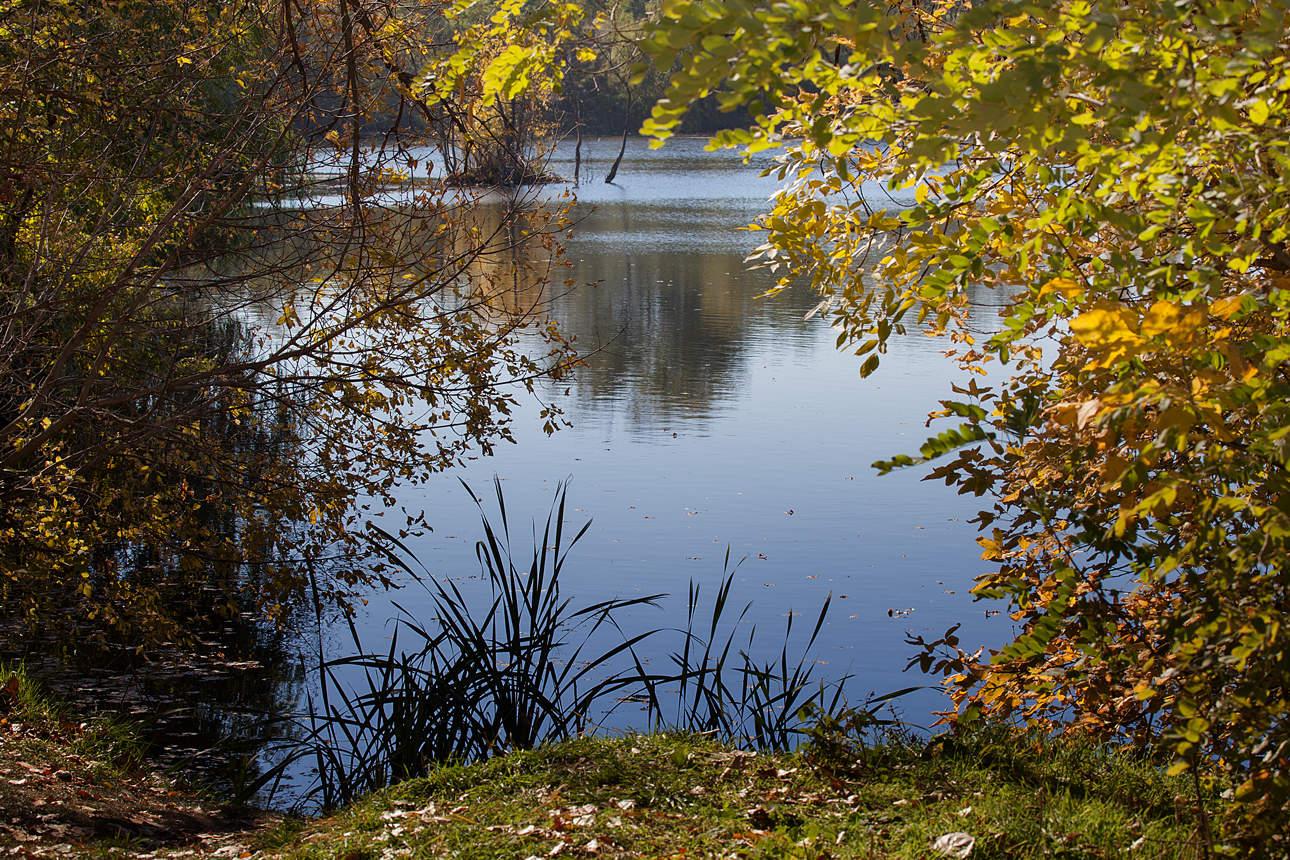 осень на пруду картинки смазывайте тушку