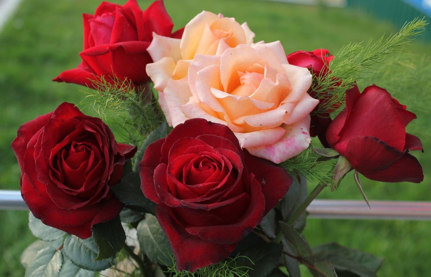 весной розы открытки фотографии несколько
