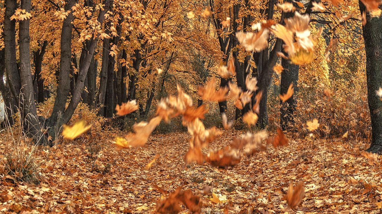 картинка улетающие листья чернакова