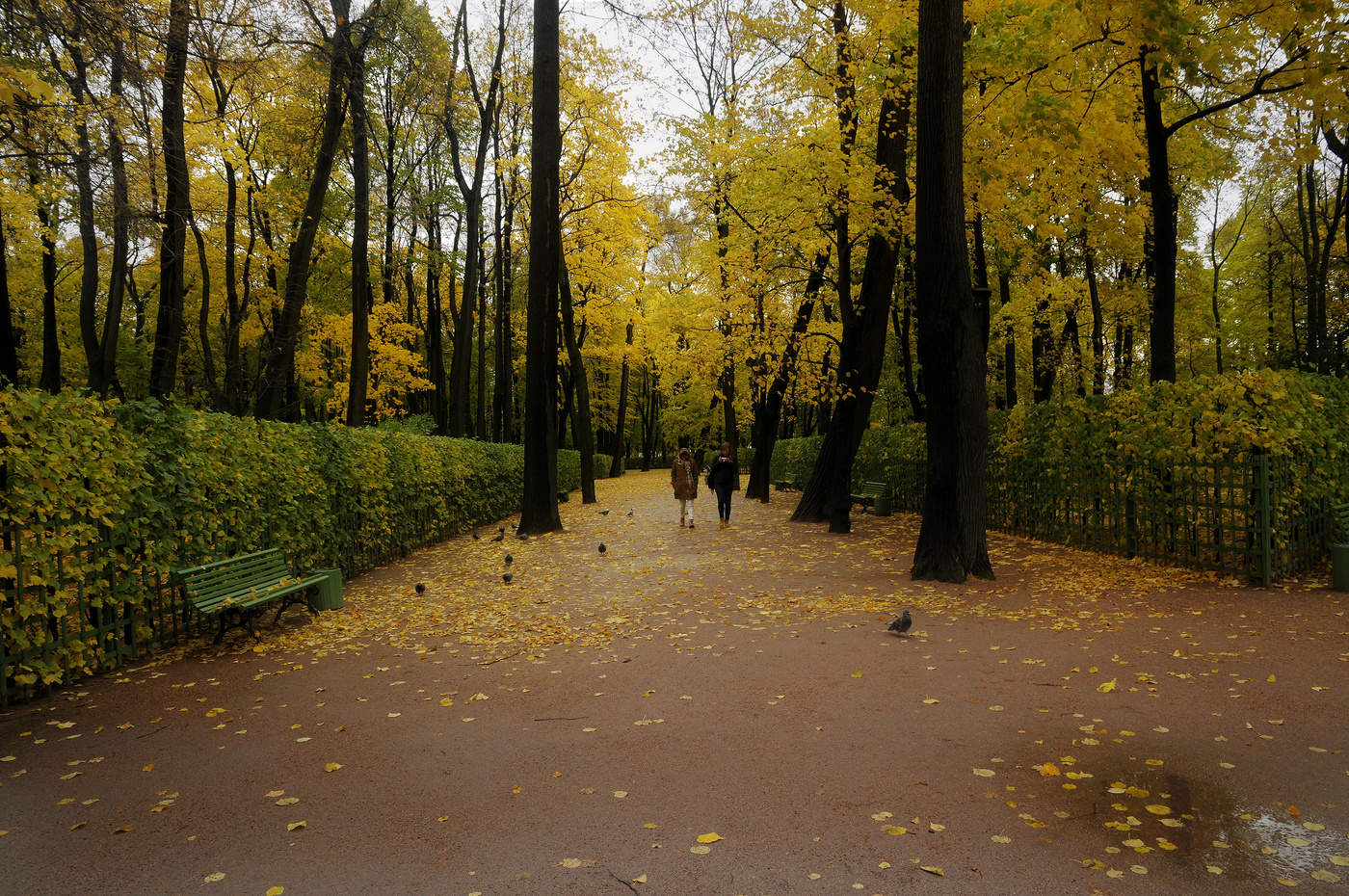 Осень в летнем саду картинки
