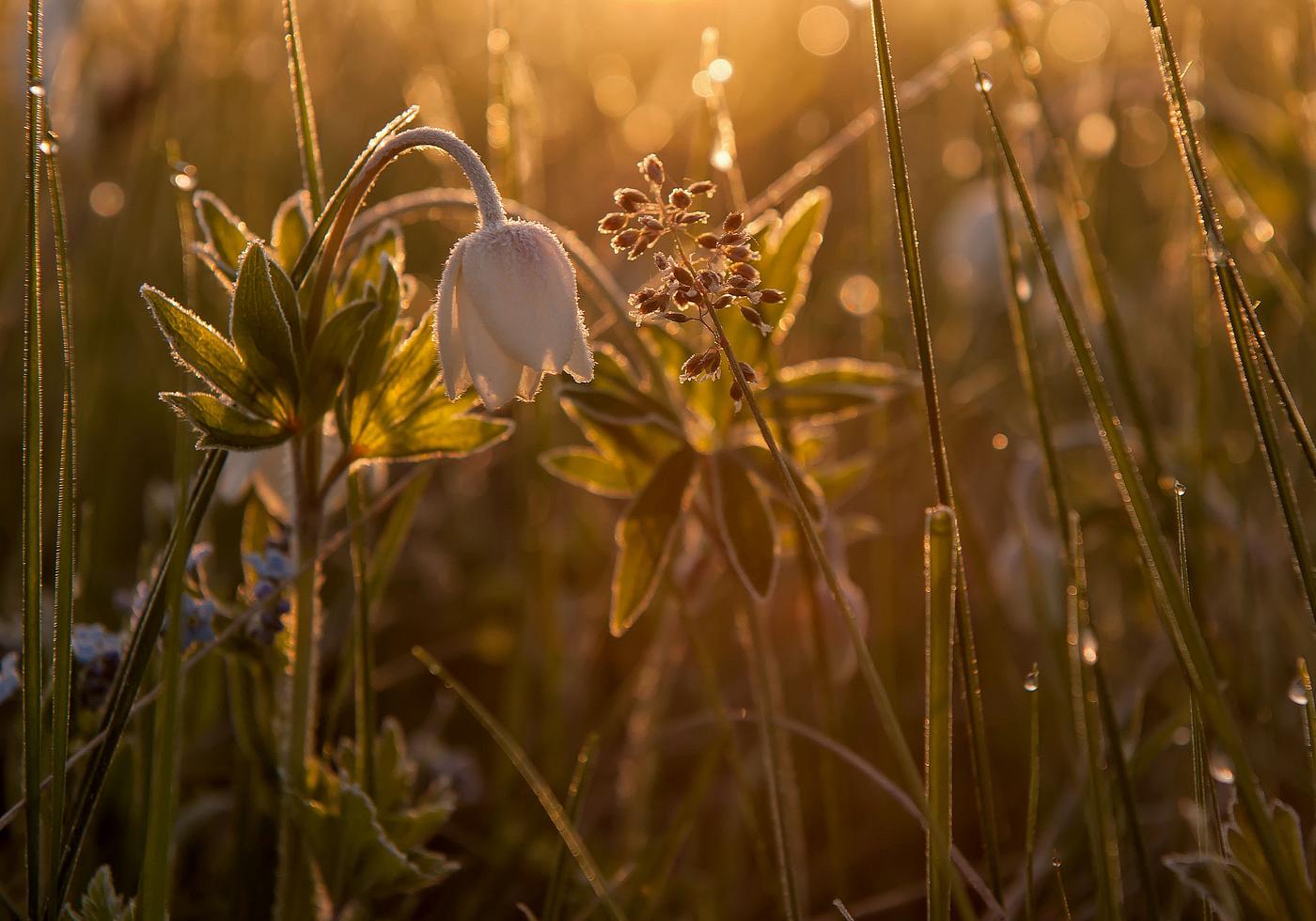 картинка на рабочий стол солнце и природа пробуждается ото сна начала придумывать нестандартные