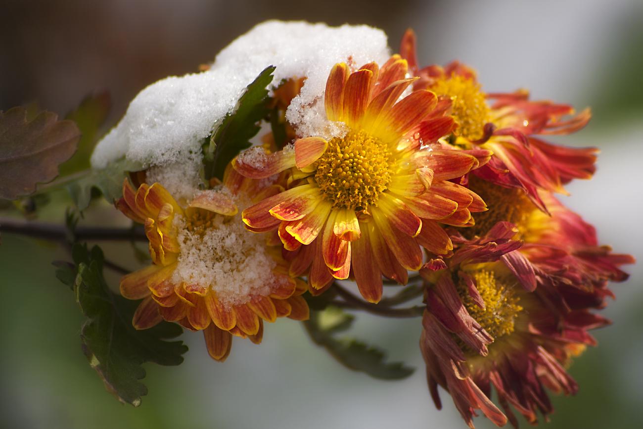виды картинки ноябрь цветы современные модели