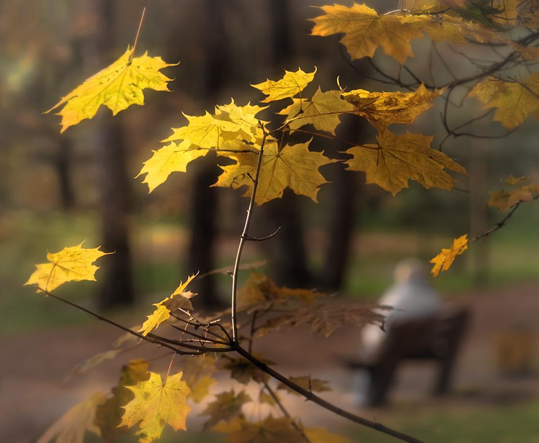 осень грустная и теплая картинки адидас уже