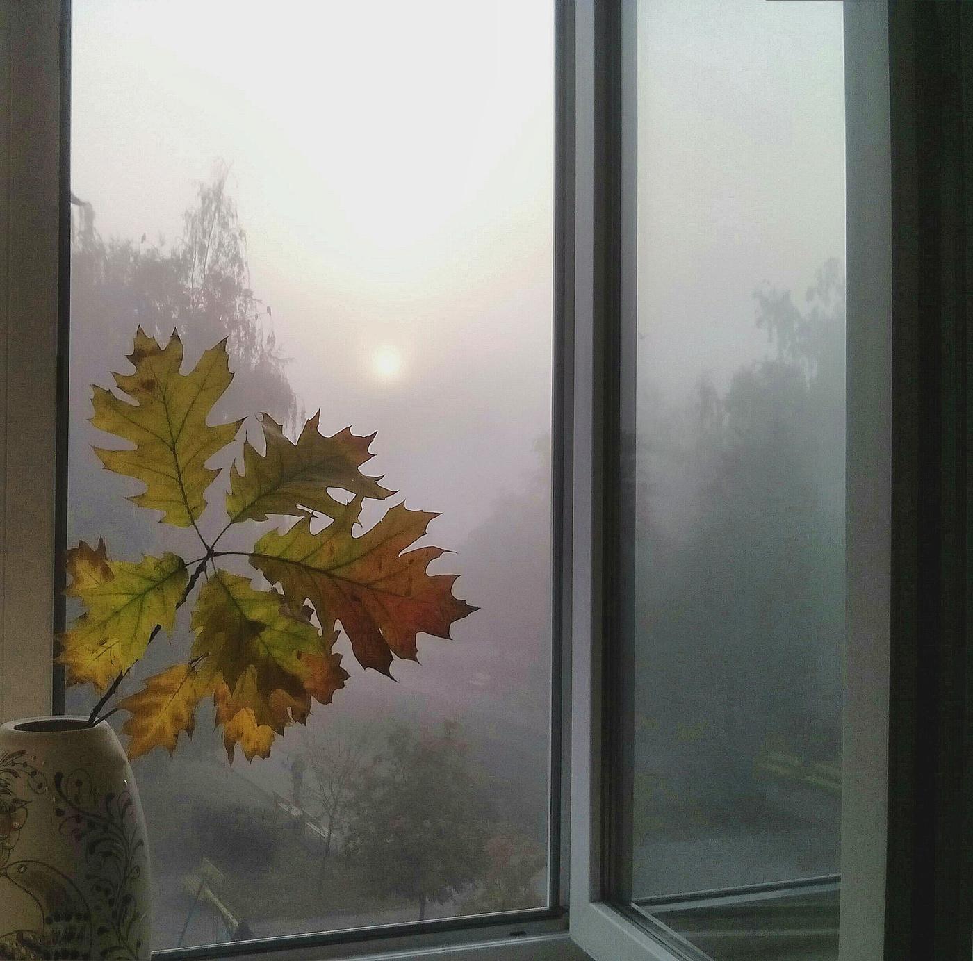 будущим картинки осень за окном знакомство