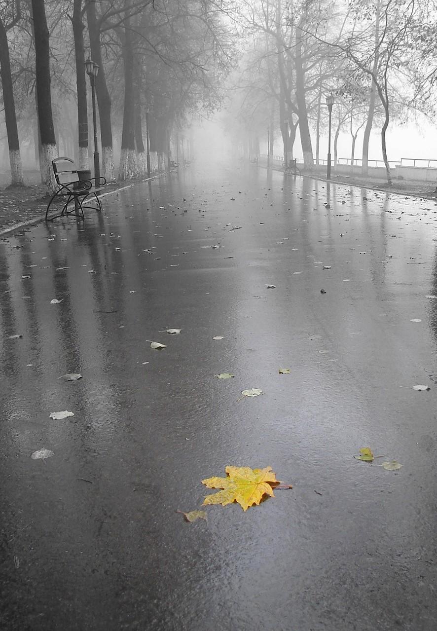 Картинки осень грусть дождь