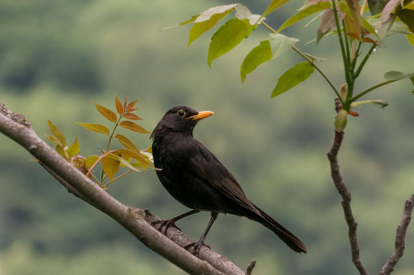 нанесения румян черные птицы имена и фото характер благородного