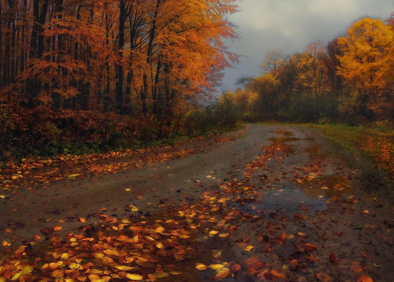 Осенние картинки с дождем, картинки ретривер солнце