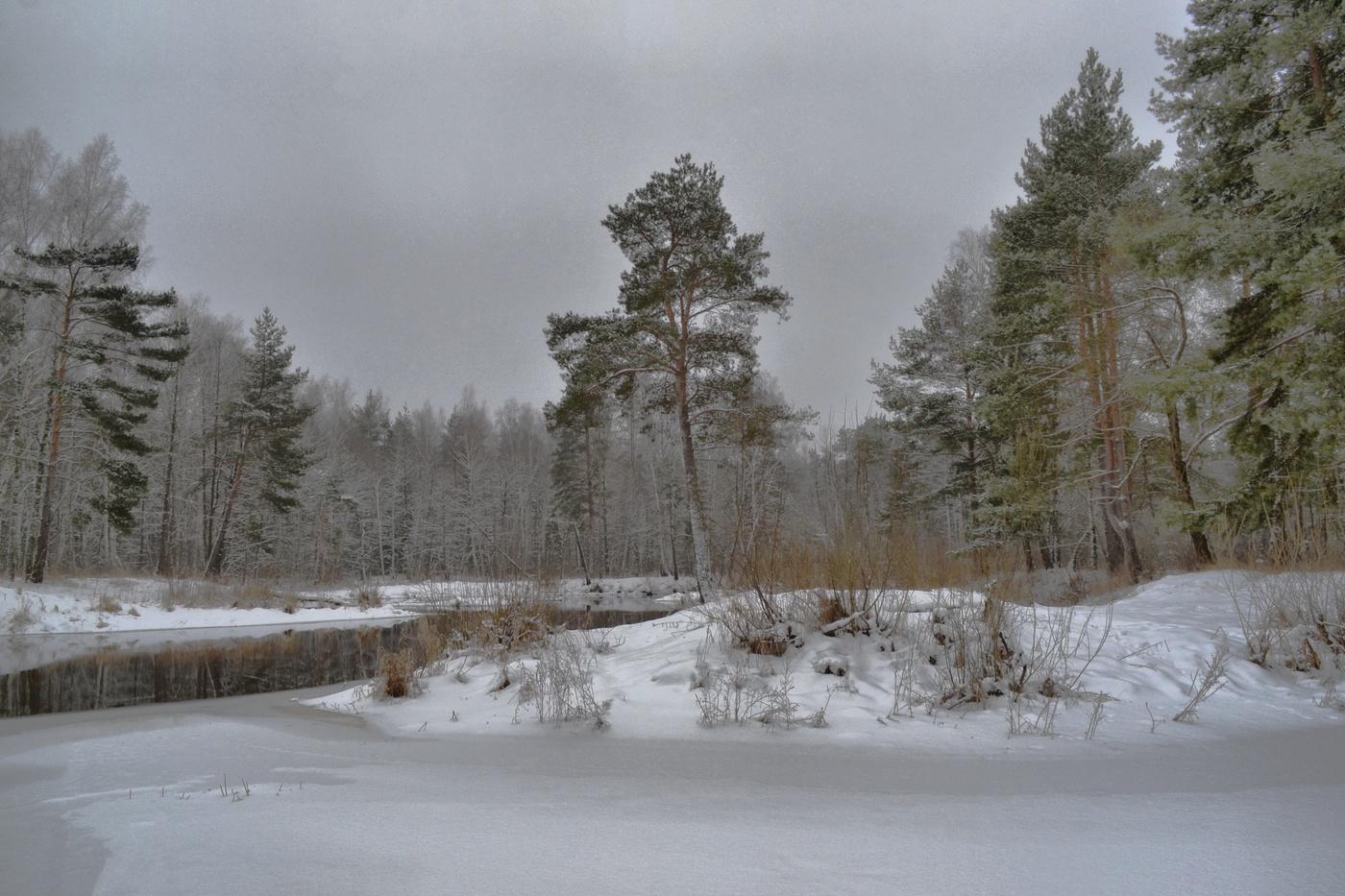 зимний лес луза фото нее много вложил