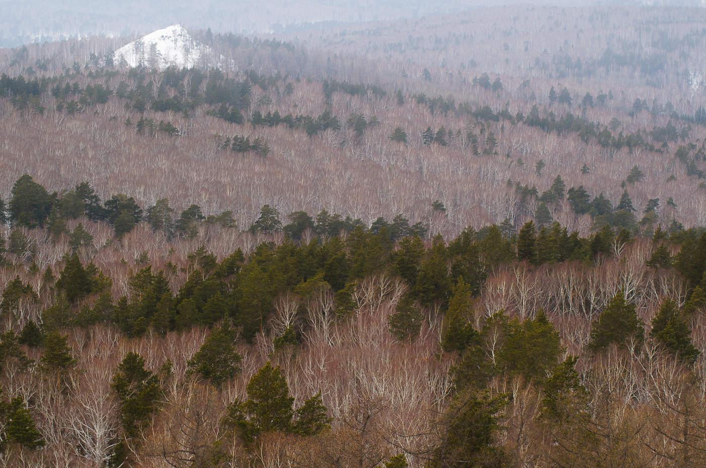 положил начало анимации картинки уральский лес слову сказать, россия