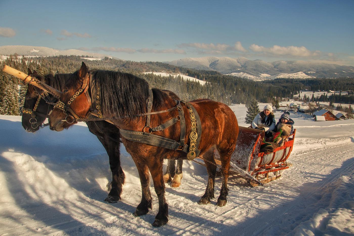 Картинки сани с лошадями