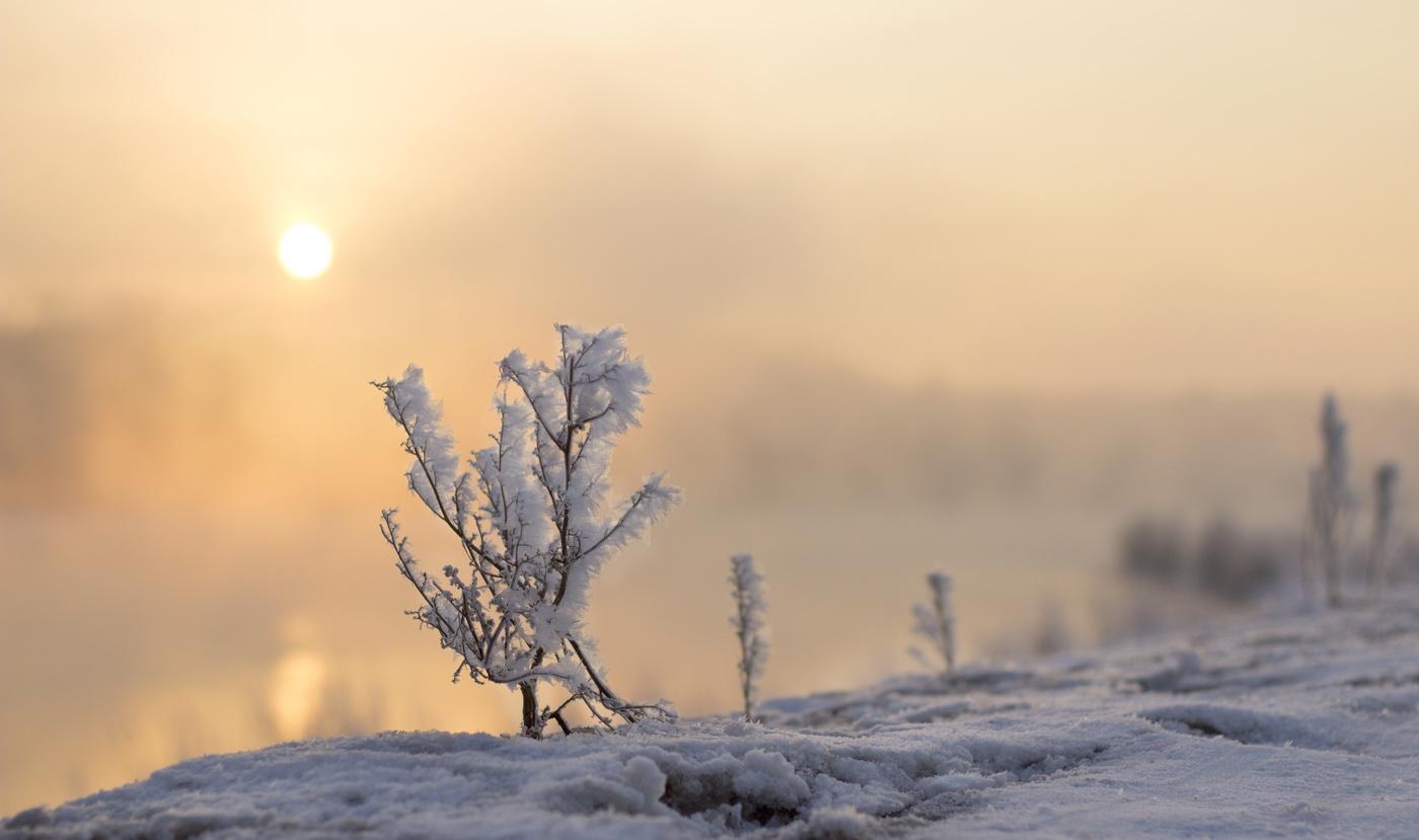Картинки оптимистам в снежное февральское утро, картинок
