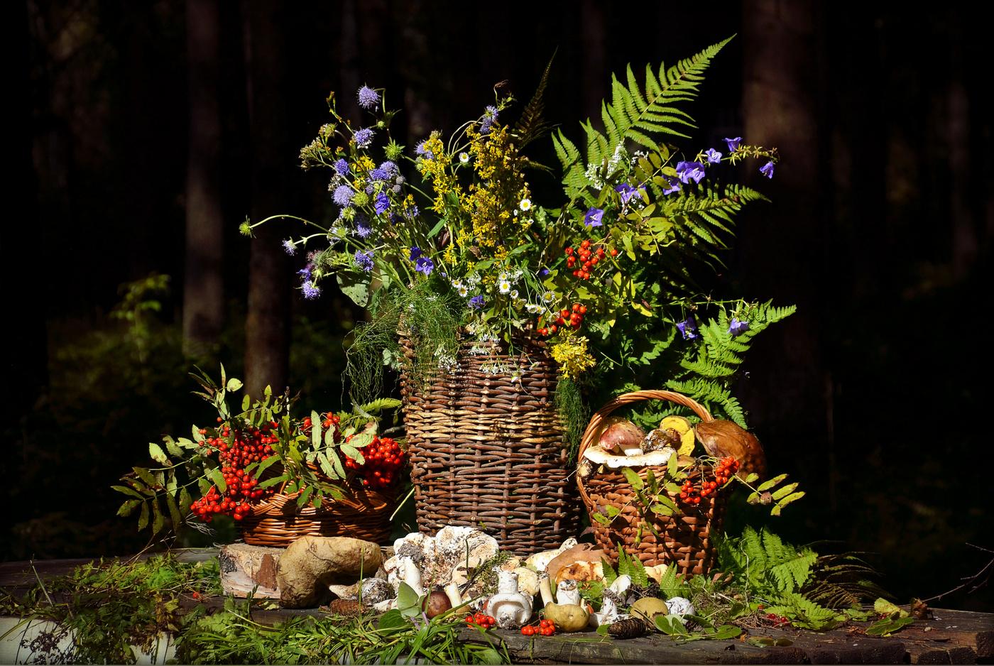 Лесной натюрморт в фотографии санчез